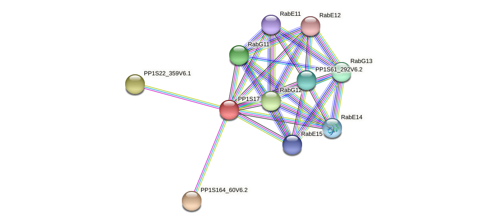 PP1S17_96V6.1 protein (Physcomitrella patens) - STRING interaction network