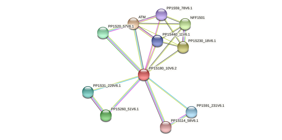 PP1S180_10V6.2 protein (Physcomitrella patens) - STRING interaction network