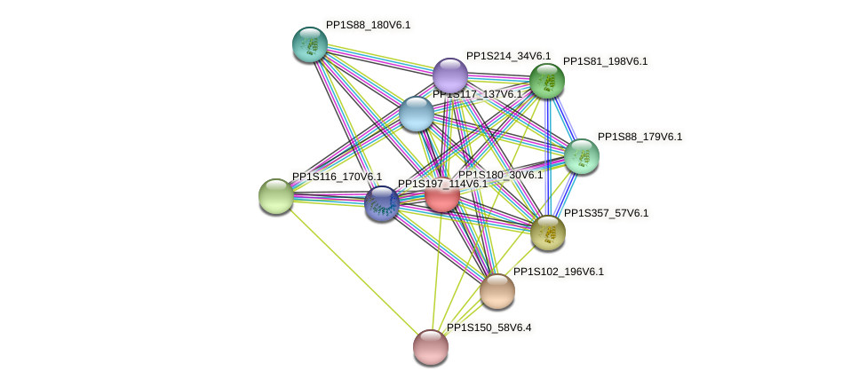 PP1S180_30V6.1 protein (Physcomitrella patens) - STRING interaction network