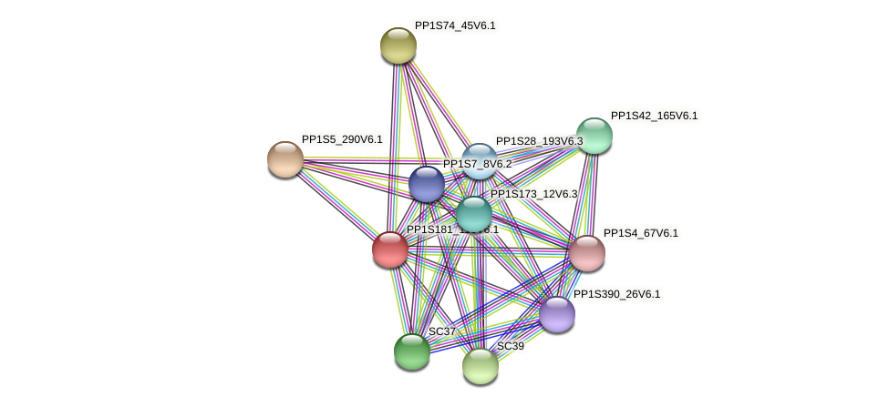 PP1S181_116V6.1 protein (Physcomitrella patens) - STRING interaction network
