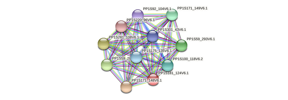 PP1S181_124V6.1 protein (Physcomitrella patens) - STRING interaction network