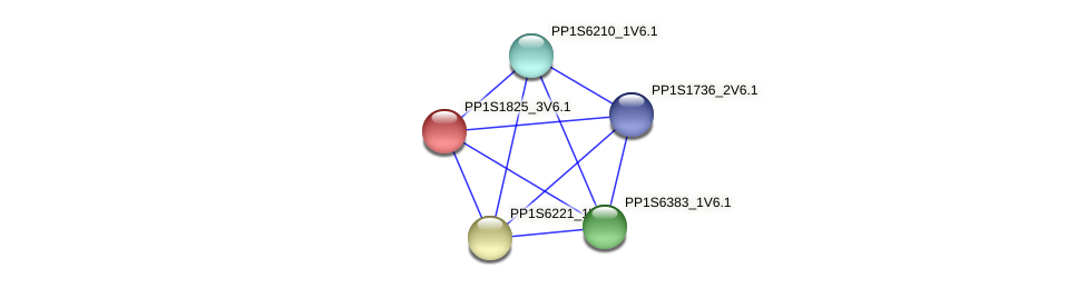 PP1S1825_3V6.1 protein (Physcomitrella patens) - STRING interaction network