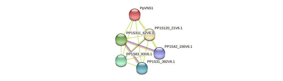PP1S182_37V6.1 protein (Physcomitrella patens) - STRING interaction network