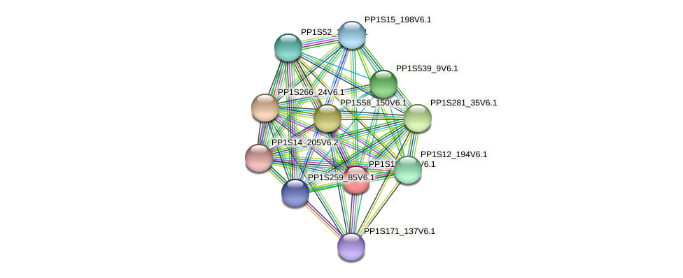 PP1S182_58V6.1 protein (Physcomitrella patens) - STRING interaction network