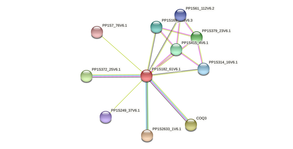 PP1S182_61V6.1 protein (Physcomitrella patens) - STRING interaction network