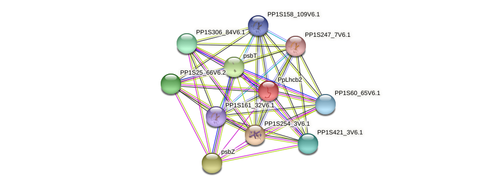 PpLhcb2 protein (Physcomitrella patens) - STRING interaction network