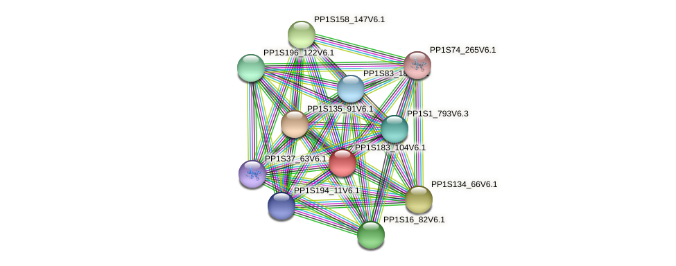 PP1S183_104V6.1 protein (Physcomitrella patens) - STRING interaction network