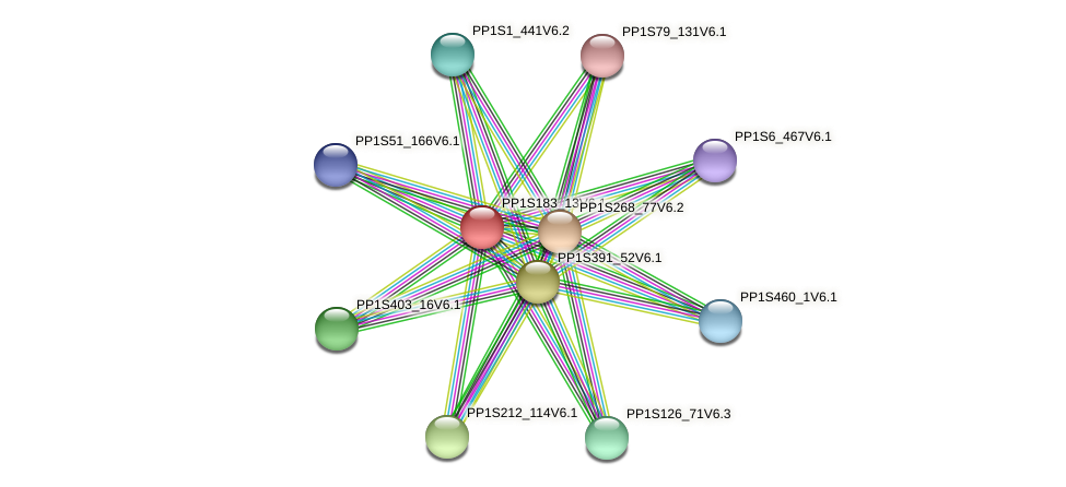 PP1S183_13V6.1 protein (Physcomitrella patens) - STRING interaction network