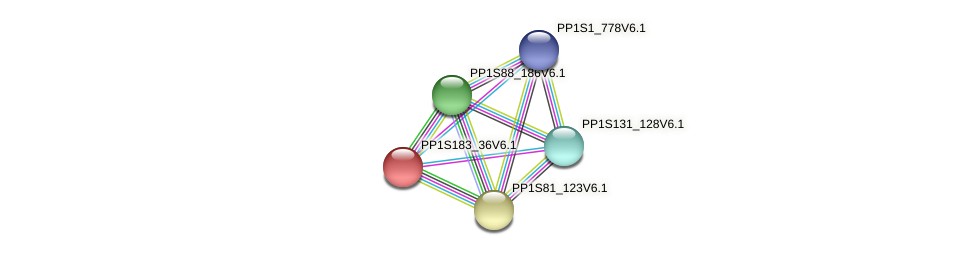 PP1S183_36V6.1 protein (Physcomitrella patens) - STRING interaction network