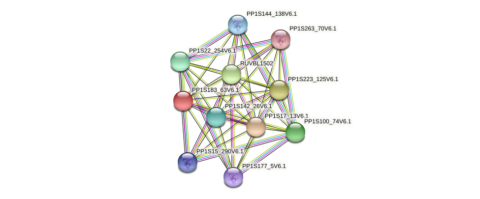 PP1S183_63V6.1 protein (Physcomitrella patens) - STRING interaction network