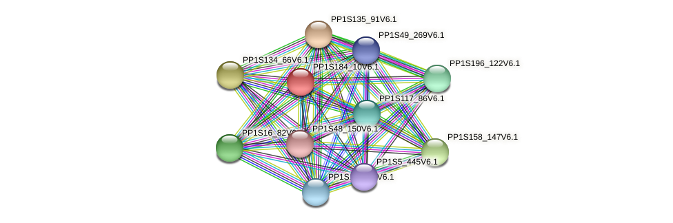 PP1S184_10V6.1 protein (Physcomitrella patens) - STRING interaction network