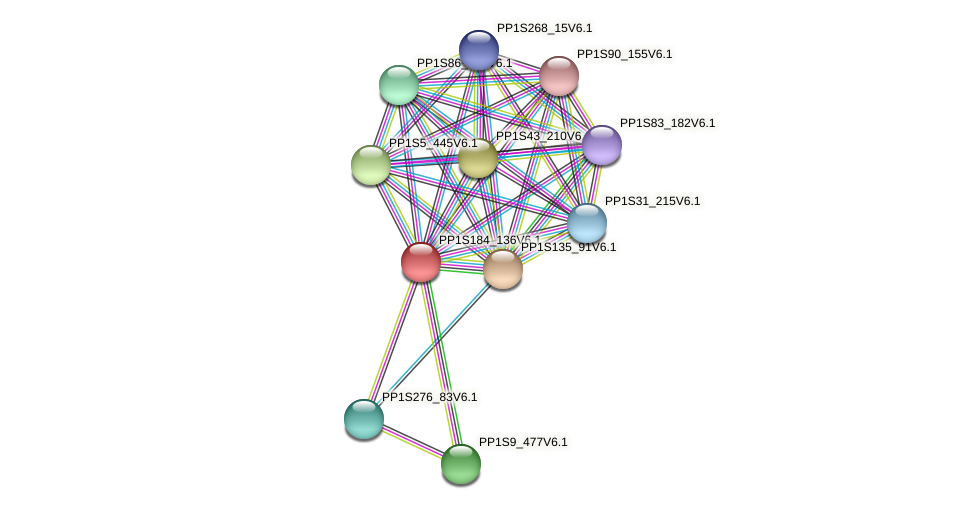 PP1S184_136V6.1 protein (Physcomitrella patens) - STRING interaction network