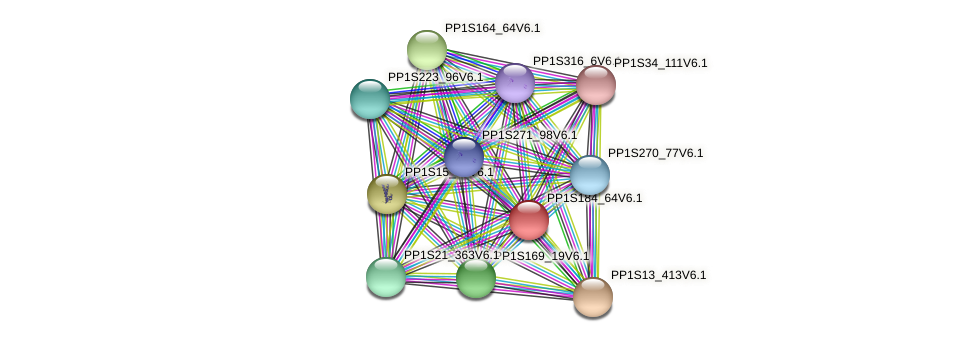 PP1S184_64V6.1 protein (Physcomitrella patens) - STRING interaction network