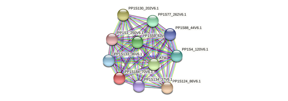 PP1S184_70V6.1 protein (Physcomitrella patens) - STRING interaction network