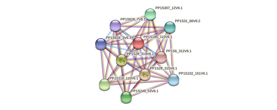 PP1S185_110V6.1 protein (Physcomitrella patens) - STRING interaction network