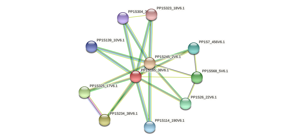PP1S185_38V6.1 protein (Physcomitrella patens) - STRING interaction network