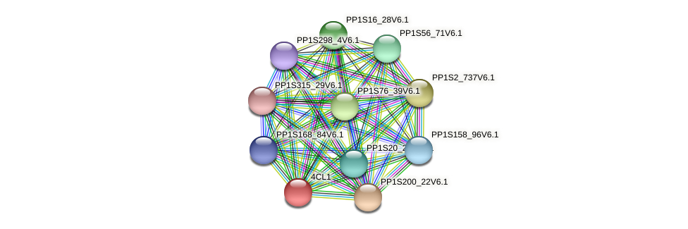 PP1S185_66V6.1 protein (Physcomitrella patens) - STRING interaction network