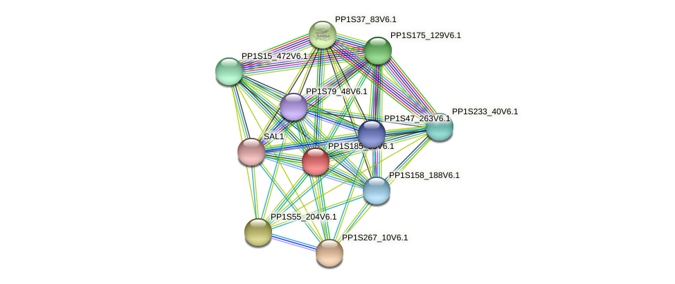 PP1S185_90V6.1 protein (Physcomitrella patens) - STRING interaction network