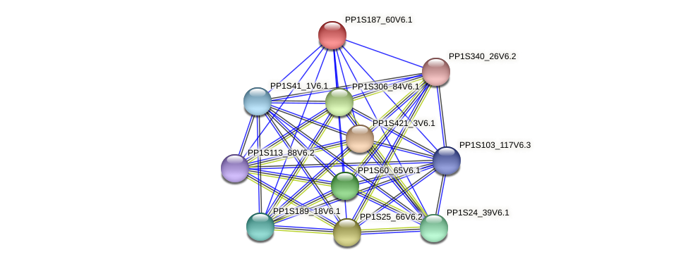PP1S187_60V6.1 protein (Physcomitrella patens) - STRING interaction network