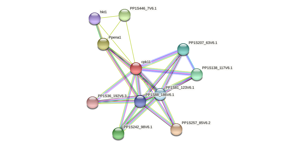 cpk11 protein (Physcomitrella patens) - STRING interaction network