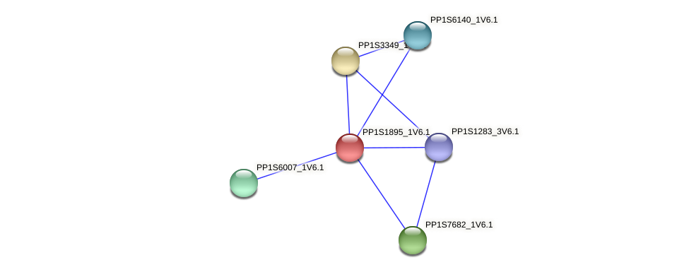 PP1S1895_1V6.1 protein (Physcomitrella patens) - STRING interaction network