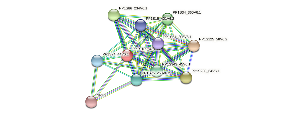 PP1S189_43V6.1 protein (Physcomitrella patens) - STRING interaction network