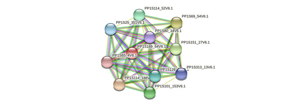PP1S189_64V6.1 protein (Physcomitrella patens) - STRING interaction network
