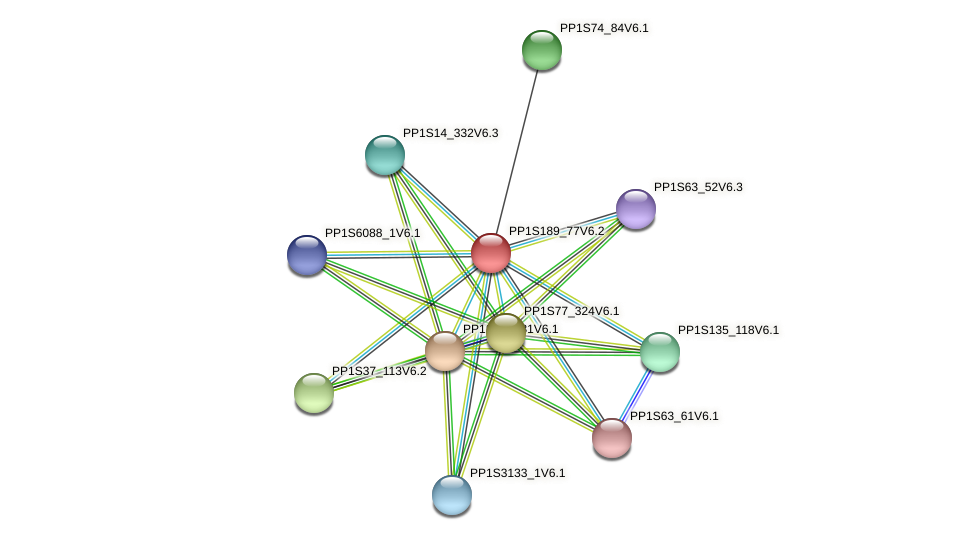 PP1S189_77V6.2 protein (Physcomitrella patens) - STRING interaction network