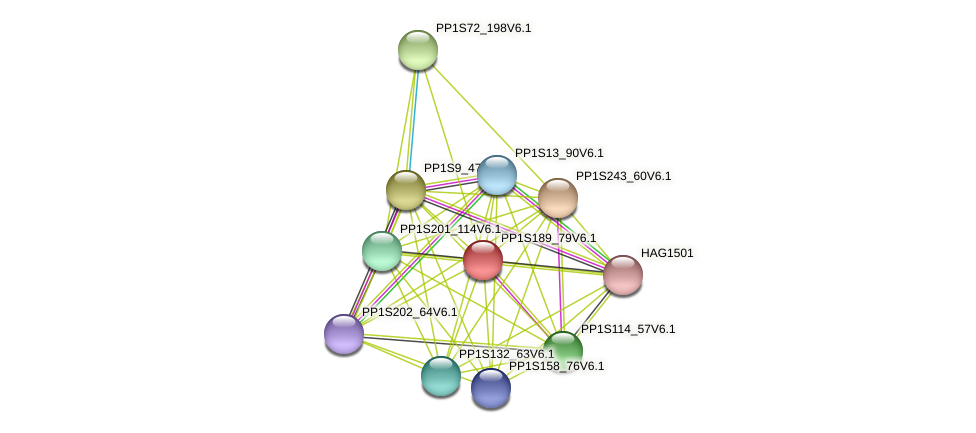PP1S189_79V6.1 protein (Physcomitrella patens) - STRING interaction network