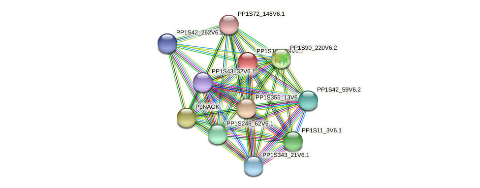 PP1S189_99V6.1 protein (Physcomitrella patens) - STRING interaction network