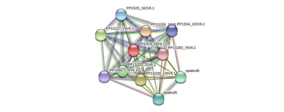 PP1S18_19V6.1 protein (Physcomitrella patens) - STRING interaction network
