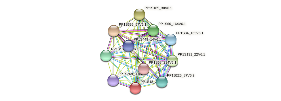 PP1S18_206V6.1 protein (Physcomitrella patens) - STRING interaction network