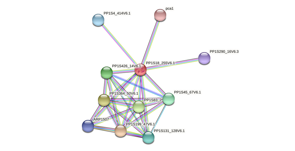 PP1S18_255V6.1 protein (Physcomitrella patens) - STRING interaction network