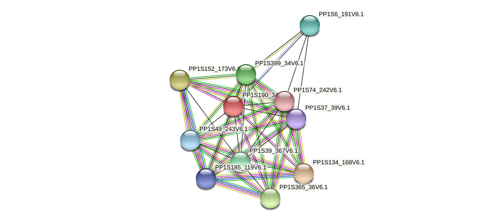 PP1S190_34V6.1 protein (Physcomitrella patens) - STRING interaction network