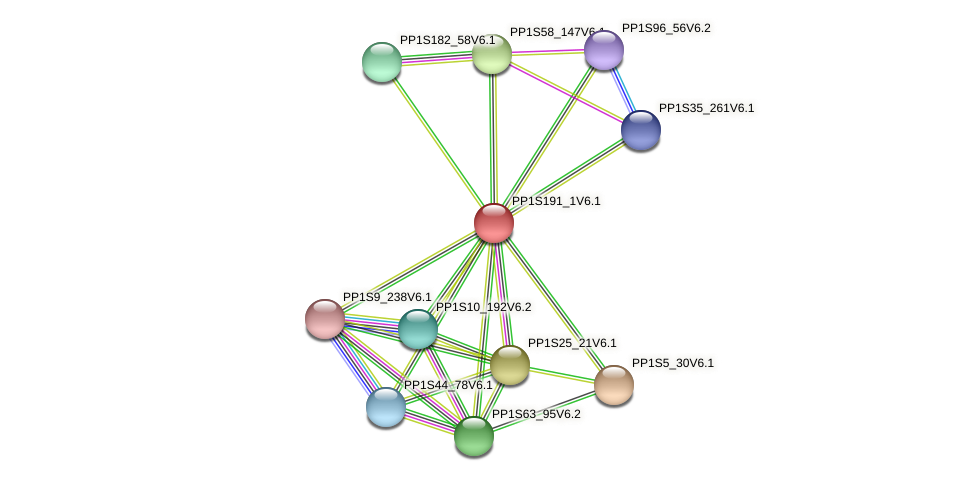 PP1S191_1V6.1 protein (Physcomitrella patens) - STRING interaction network