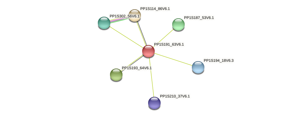 PP1S191_63V6.1 protein (Physcomitrella patens) - STRING interaction network