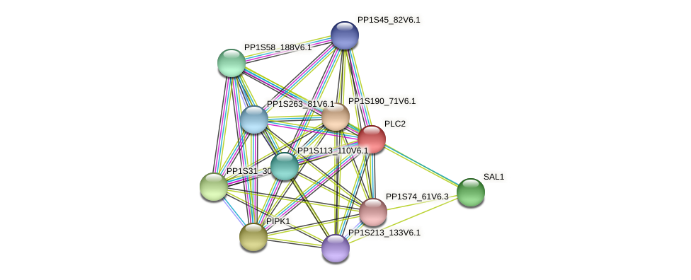 PLC2 protein (Physcomitrella patens) - STRING interaction network