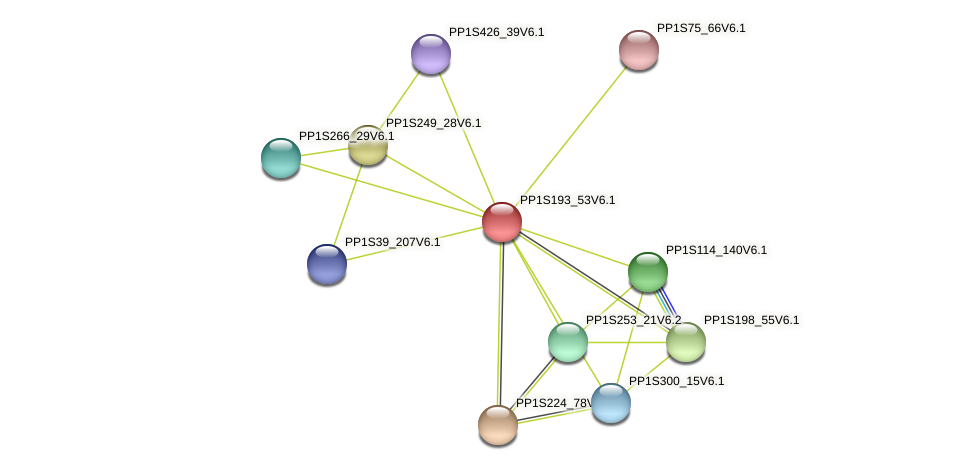 PP1S193_53V6.1 protein (Physcomitrella patens) - STRING interaction network