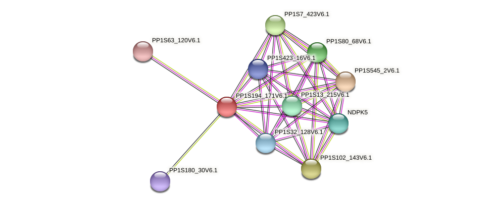 PP1S194_171V6.1 protein (Physcomitrella patens) - STRING interaction network