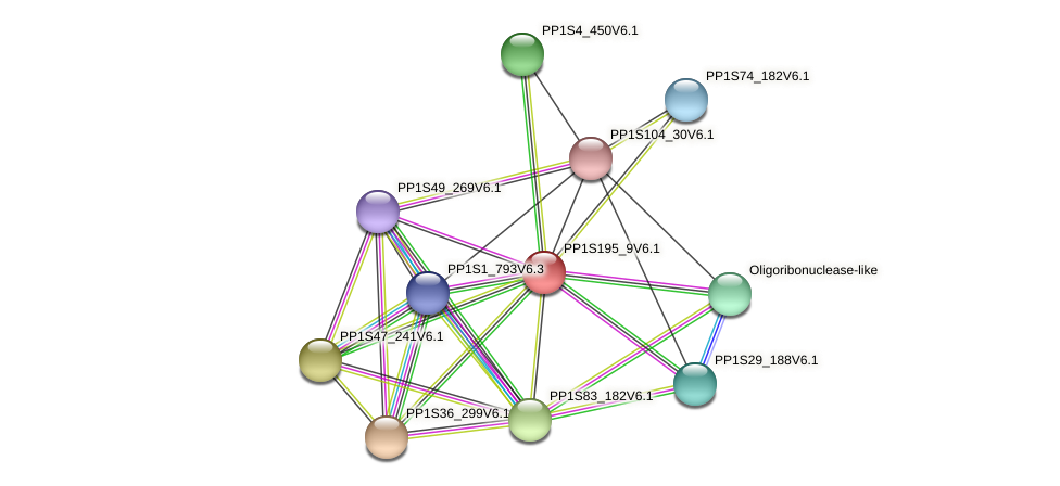PP1S195_9V6.1 protein (Physcomitrella patens) - STRING interaction network