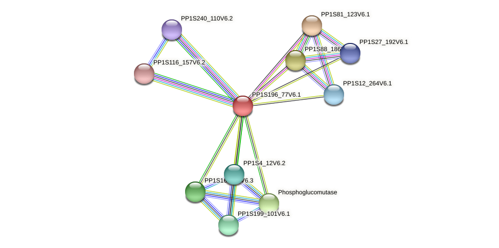 PP1S196_77V6.1 protein (Physcomitrella patens) - STRING interaction network