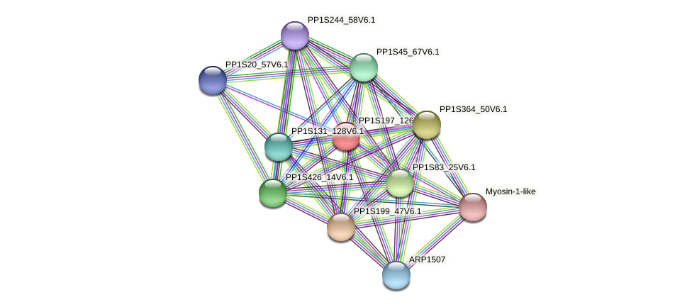 PP1S197_126V6.1 protein (Physcomitrella patens) - STRING interaction network