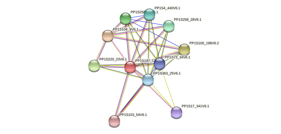 PP1S197_130V6.1 protein (Physcomitrella patens) - STRING interaction network