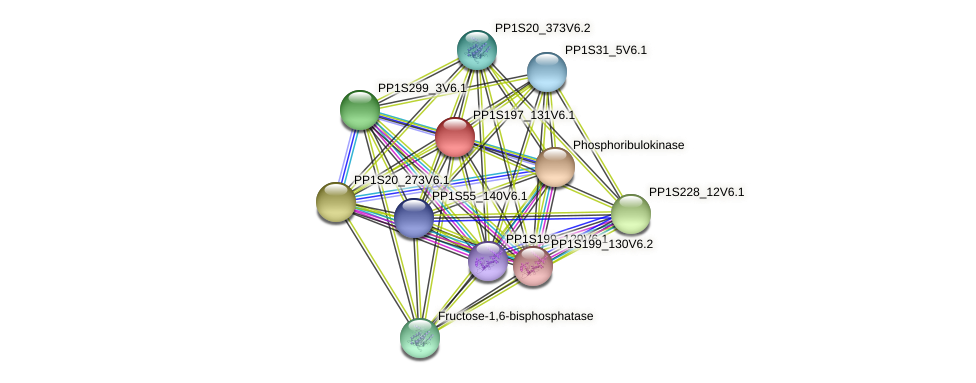 PP1S197_131V6.1 protein (Physcomitrella patens) - STRING interaction network