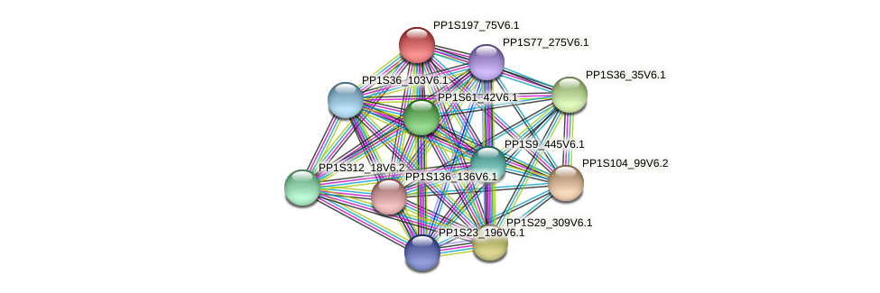 PP1S197_75V6.1 protein (Physcomitrella patens) - STRING interaction network