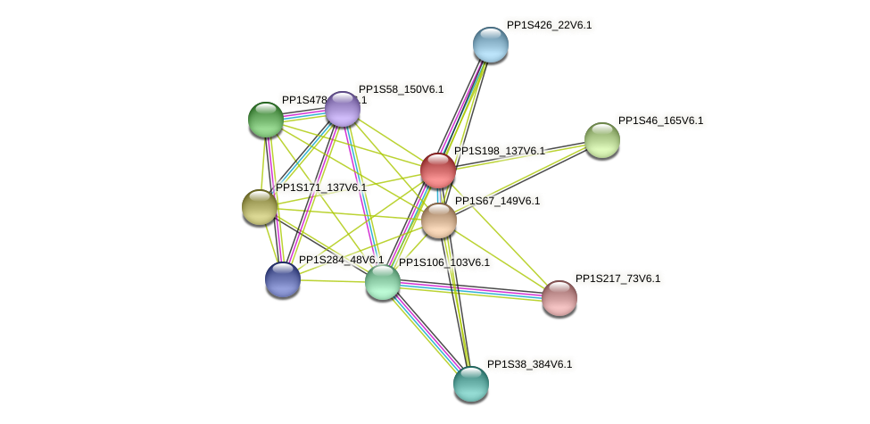 PP1S198_137V6.1 protein (Physcomitrella patens) - STRING interaction network