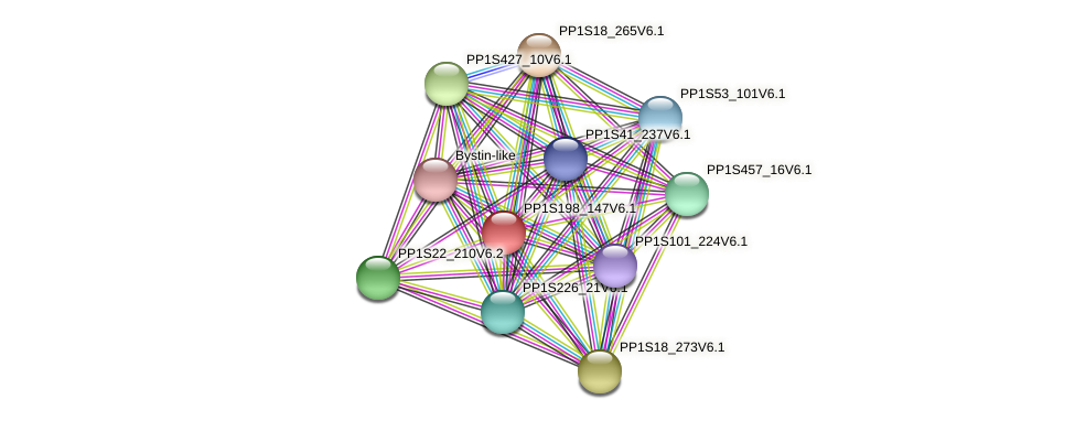 PP1S198_147V6.1 protein (Physcomitrella patens) - STRING interaction network