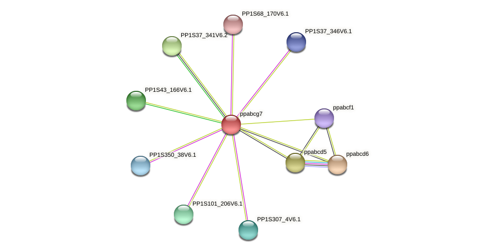 ppabcg7 protein (Physcomitrella patens) - STRING interaction network