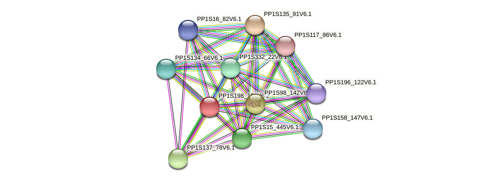 PP1S198_153V6.2 protein (Physcomitrella patens) - STRING interaction network