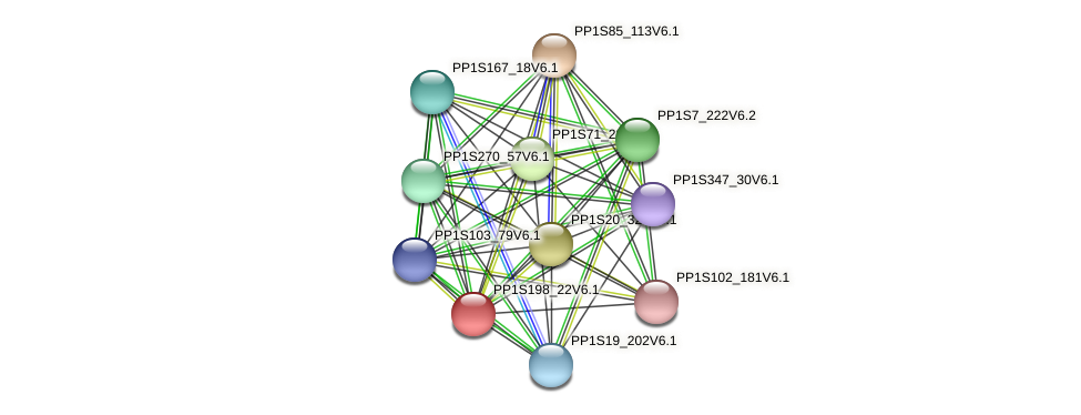 PP1S198_22V6.1 protein (Physcomitrella patens) - STRING interaction network